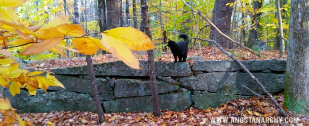 Bitey the Woods Can on top of Stone Wall