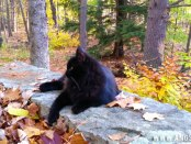 Bitey the Cat in the Woods