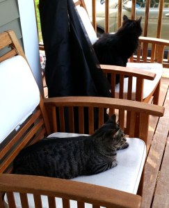 2 Cats sit on chairs outside