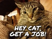 Hey Cat, Get a job! Photo of Cat looking at camera
