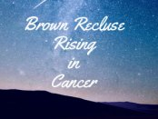 Photo: sky and stars. Text: Brown Recluse Rising in Cancer